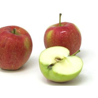 """Äpfel - """"Collina"""" (Frühapfel)"""