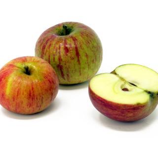 """Äpfel - """"Cox Orange"""""""