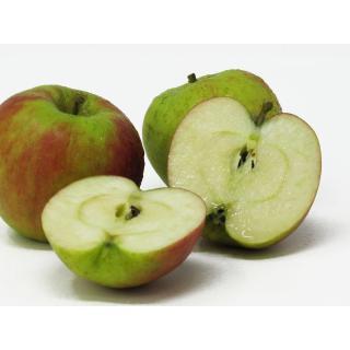 """Äpfel - """"Holsteiner Cox"""""""