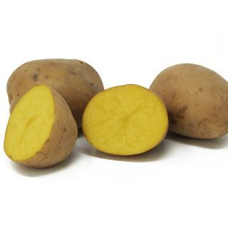 Kartoffeln festk. - Übergröße 12,5kg